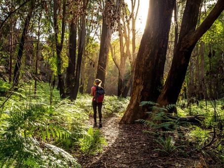 Anti-stress, immunité renforcée : ces bienfaits insoupçonnés des balades en forêt