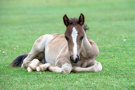 Pony im Feld