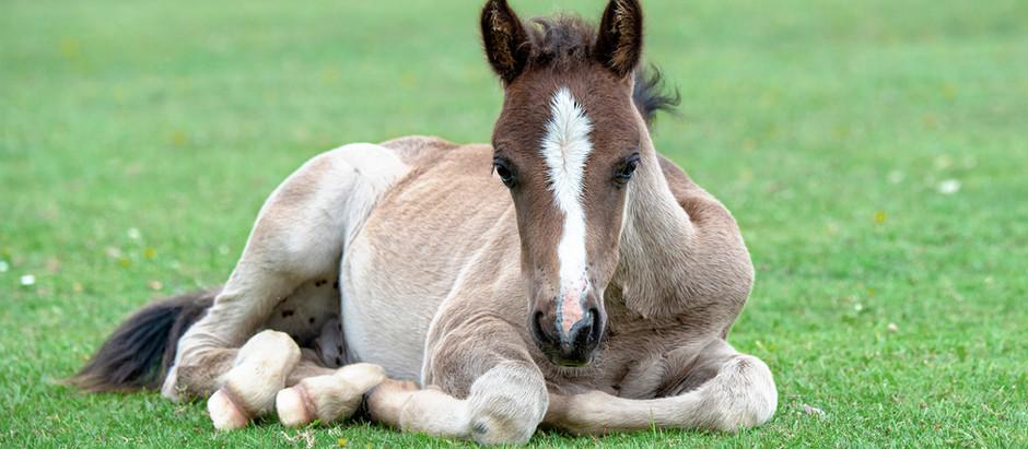 Equine Breeding