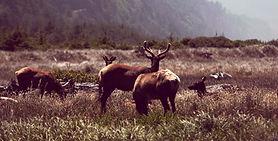 dzika przyroda|fauna i flora|dzikie zwie