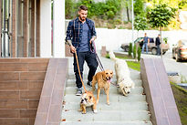 Male Dog Walker