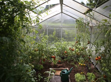 Top Ten Tomato Growing Tips!