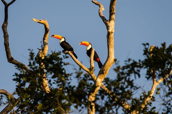 Birds on Trees