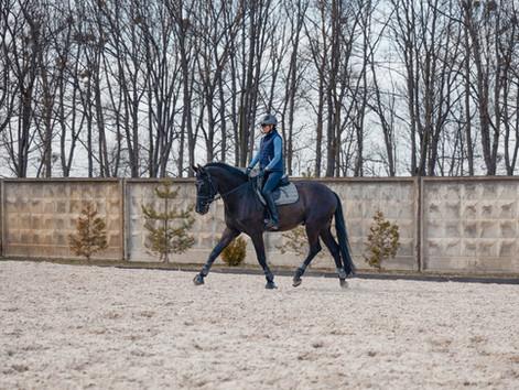 Equine massage benefits on sport horses