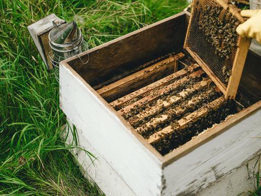 Apicultores da Serra do Teixeira se organizam para obterem a certificação do mel