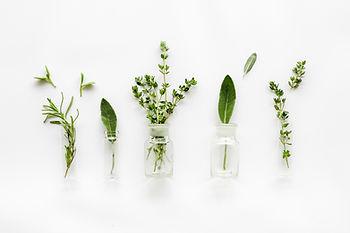 סוגים של צמחי מרפא סינים