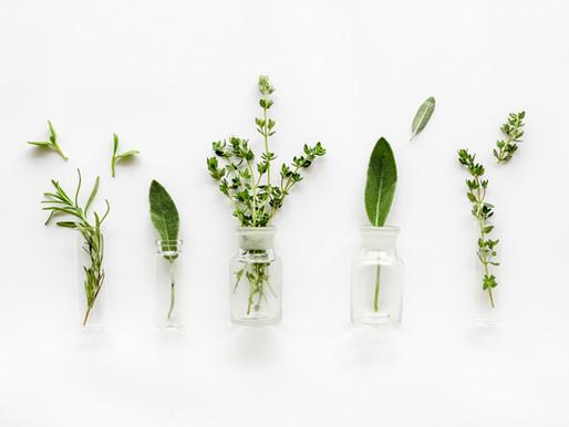 7 Indoor Crops for Winter Gardening