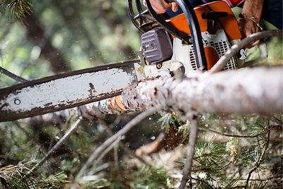 Cutting Woods