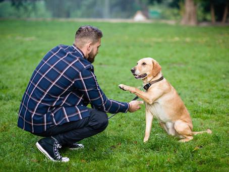 Différence entre éducateur canin et comportementaliste canin