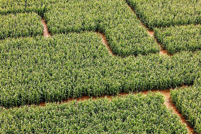 Corn Maize Labyrinth