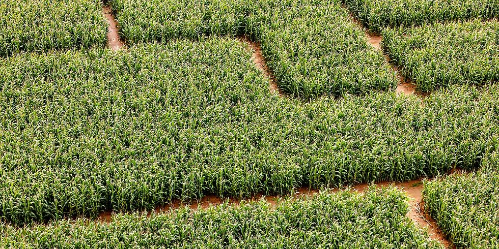 Women's Ministries Corn Maze