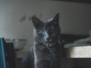 """CRITIQUE : """"Demain les chats"""""""