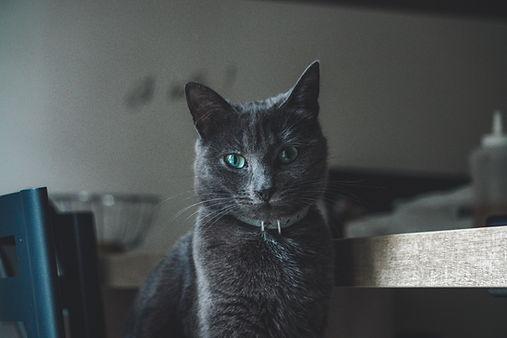 croccantini gatto