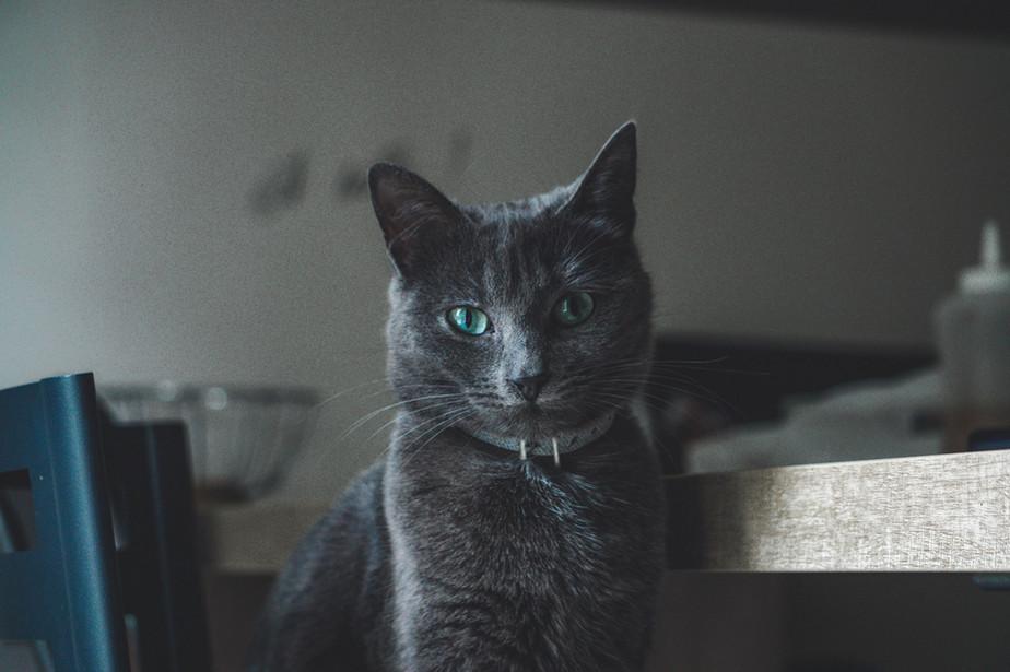 Felix, 6 ans