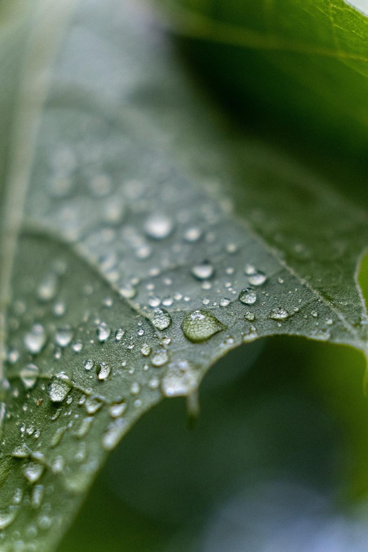 Maîtriser les paramètres météo pour l'agriculture