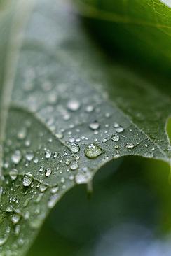 Gouttes de pluie sur feuille