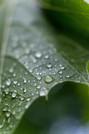 Gotas de lluvia en la hoja