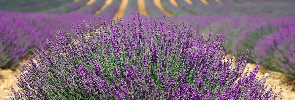 Lavender Crumble
