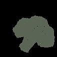 dibujo Brócoli