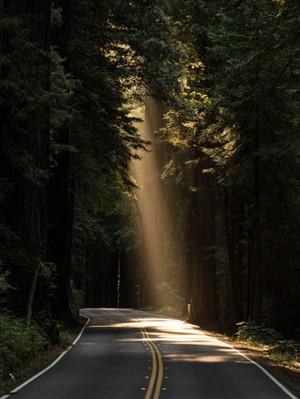 Proteção angelical em caminhos estabelecidos