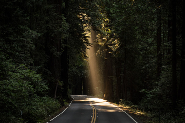 Forest Road