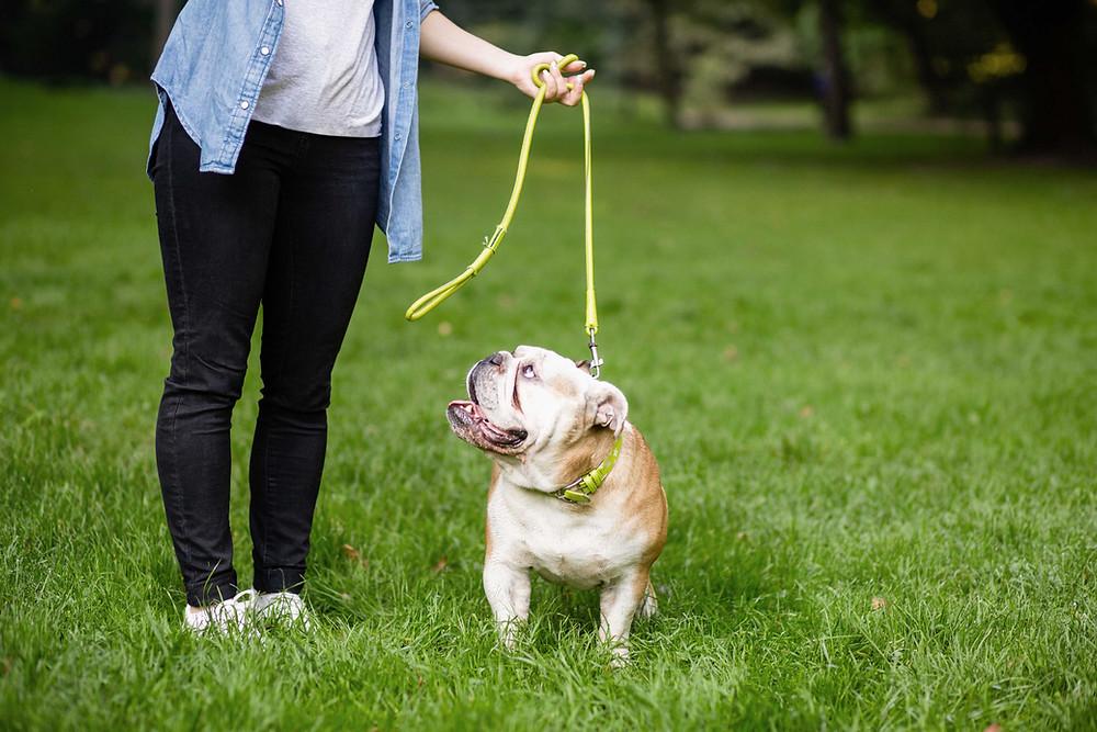 Puppy training on a leash.