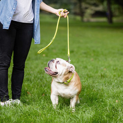 5 More Reasons Why Your Dog Ignores Your Commands