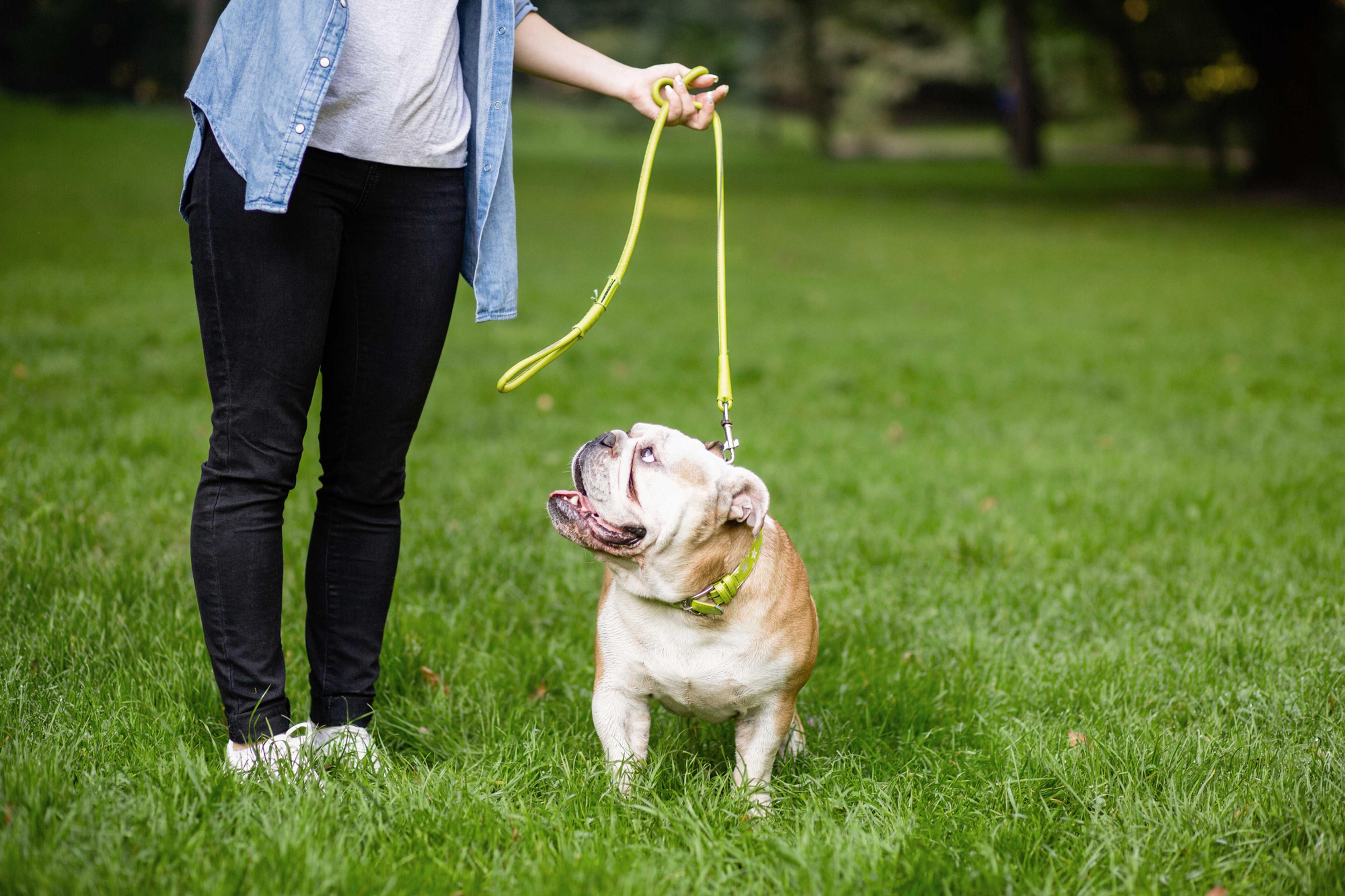 Basic Obedience Training