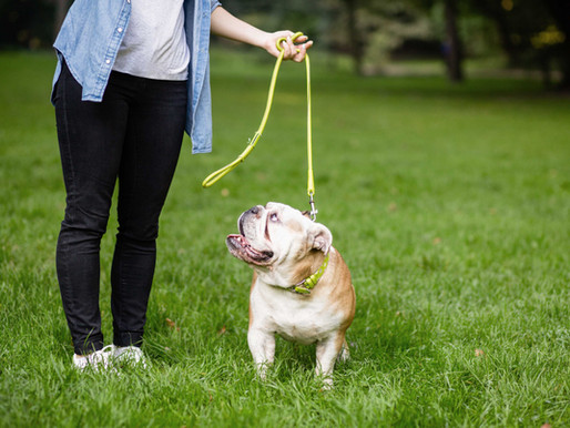 What Is Positive Reinforcement Training?