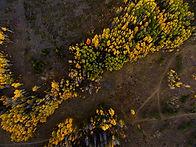 Luftaufnahme des Waldes