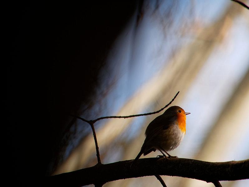 Kleine vogel