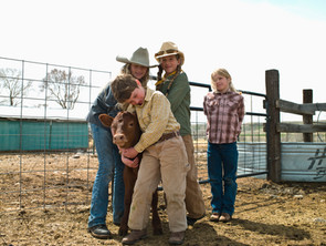 Constructing Cattle Yards For Small Landholders