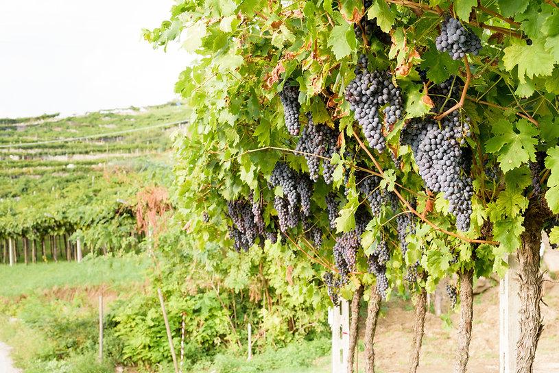 Dry Creek Wine Tour