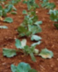 Fazenda Vegetal