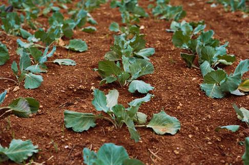 Gemüsefarm