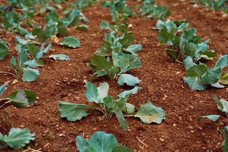 Ferme de légumes