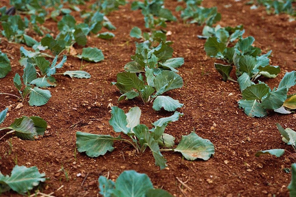 Granja de vegetales