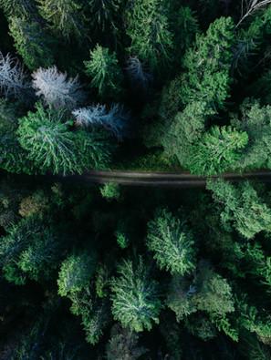 Waldbaden - Erlebe die heilende Kraft des Waldes