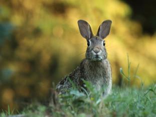 Schöne Ostern: Die Geschichte vom Osterhasen
