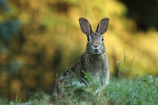 Coping with Rabbits