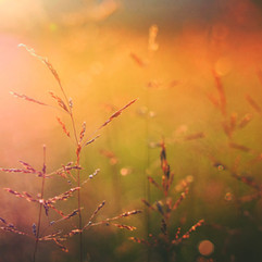 Východ slunce na přírodu