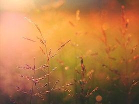 Soluppgång på naturen