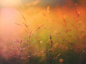 Lever du soleil sur la nature