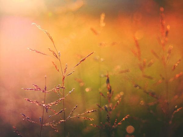 Nascer do sol na natureza