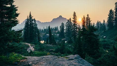 木に沈む夕日
