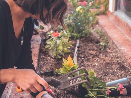 認知症の無気力が園芸で改善するか?