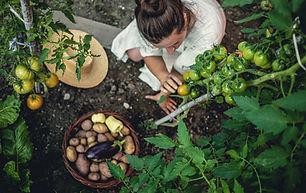 Legumes cultivados em casa
