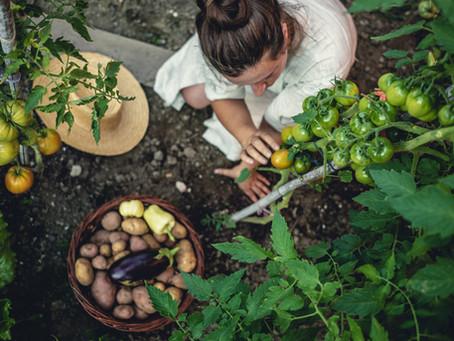 Letní péče o zeleninu