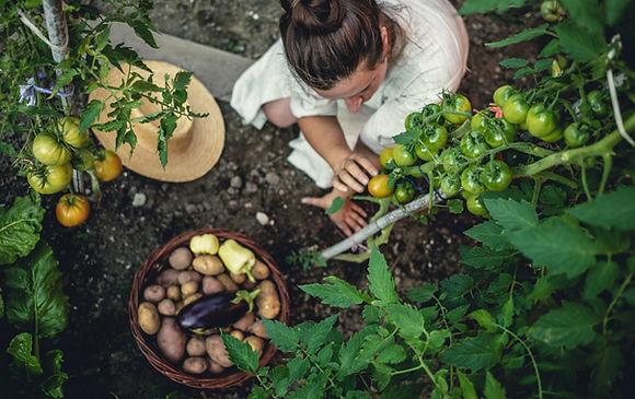 légumes frais potager