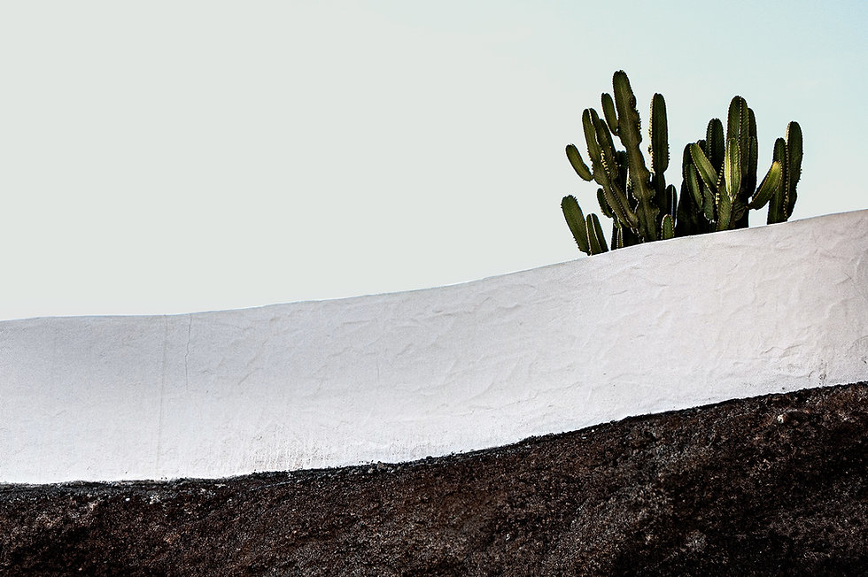 Concrete Wall and Cactus
